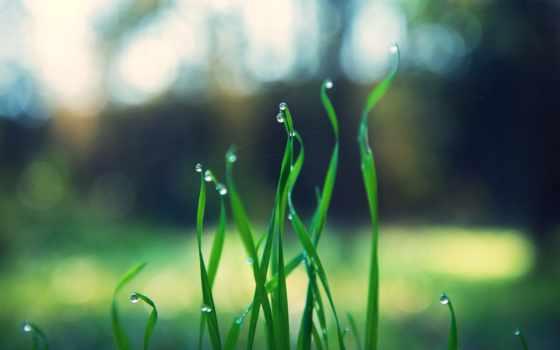 grass, nature, green