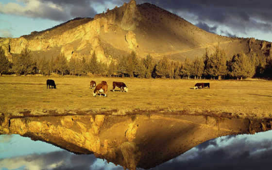 воде, отражение, красивых