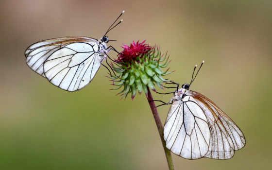 бабочки, цветок, ty
