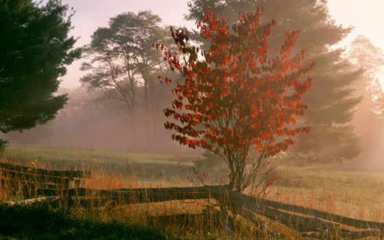 природа, деревья, desktop, samsung, images, туман,