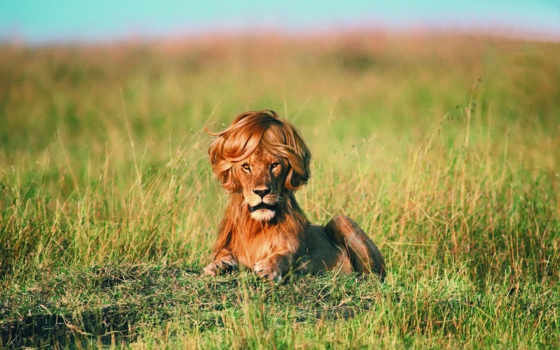 львов, статусы, pro, львах, львы, все,