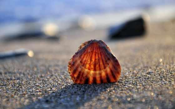 макро, море, seashell, песок, берег, пляж, ipad,