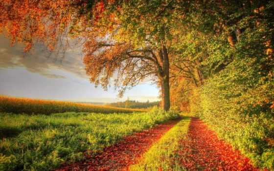осень, дорога, поле, закат, дневник, силы, космос, trees, женской, landscape,