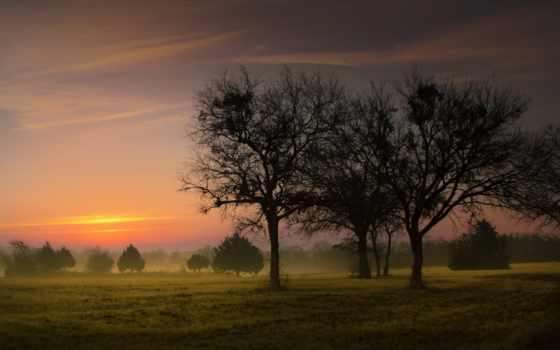 раннее, утро, туман, поле, trees, лес, рассвет, широкоформатные, природа,