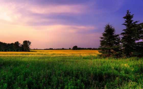 микс, природа, красивые, подборка, большие, поле, нояб, trees,