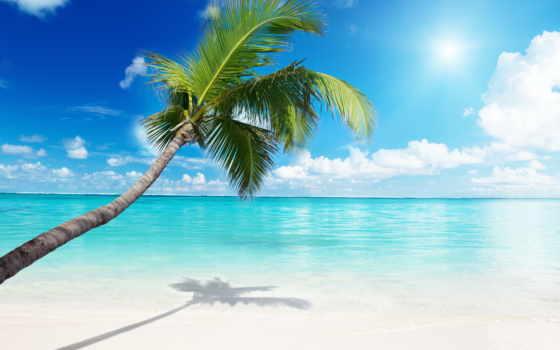 palm, море, пляж, bg, фотообои, пейзажи -,