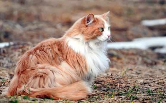 люди, кот, мире, кошки, коты, день, кошек, воители,