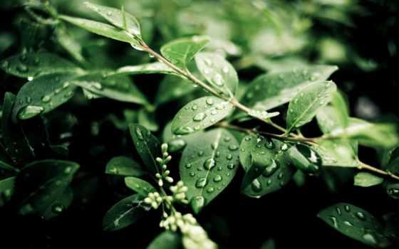 после, дождя, капли, листва, summer, природа,