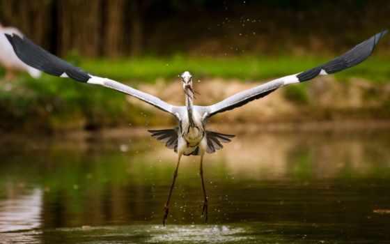 stork, рисунок, картинка