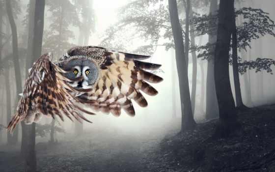 сова, полет, крылья