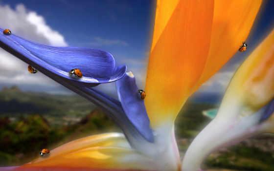 цветы, free, photos