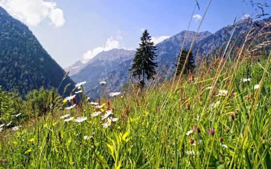 summer, природа, горы, альпы, луг, цветы, вечер,