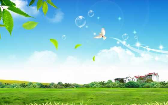 house, bubbles, птица, газон, дерево, фон, home,