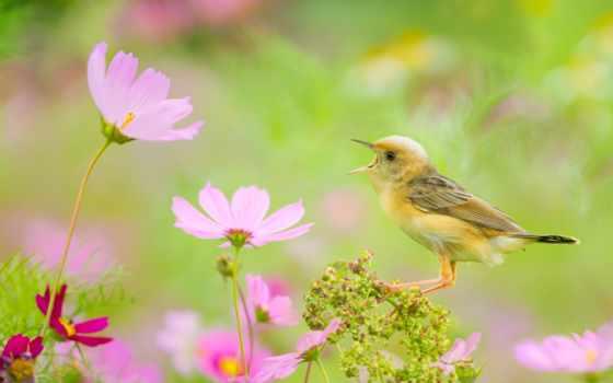 virág, nyár, nyári, flickr, птица, космея, hive, photos, цистикола,