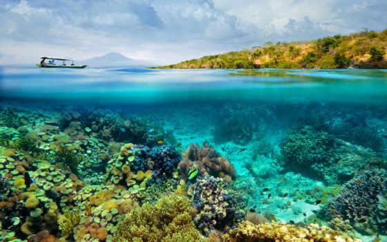 bottom, морское, море, pisces, кораллы, нравится, world, underwater, layer, страница,