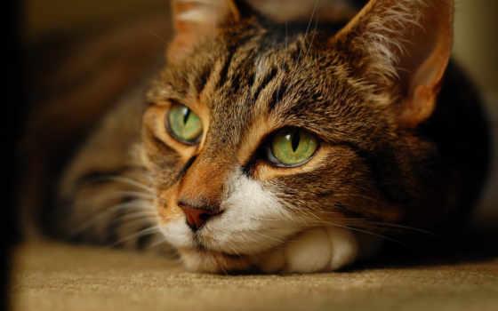 кот, котенок, задумчивый, одно, нужный, выберите, этого, доступных, только,