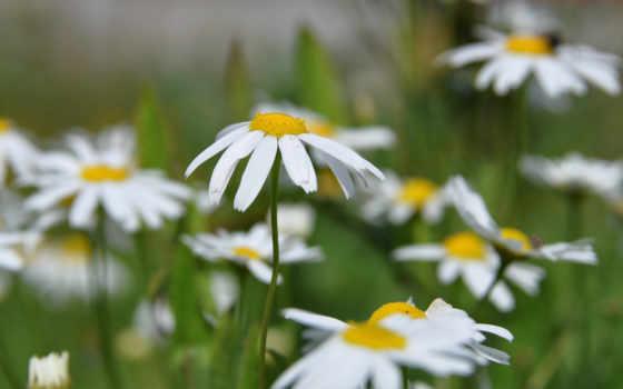 цветы, sun, cvety