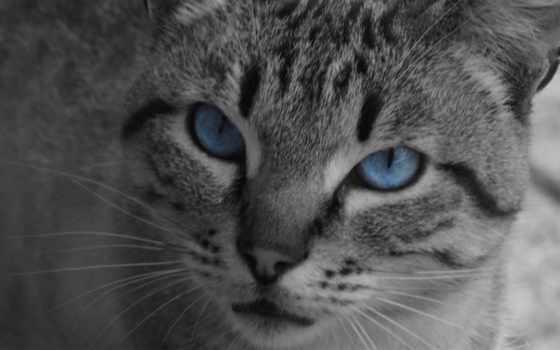 чёрно, белые, голубыми
