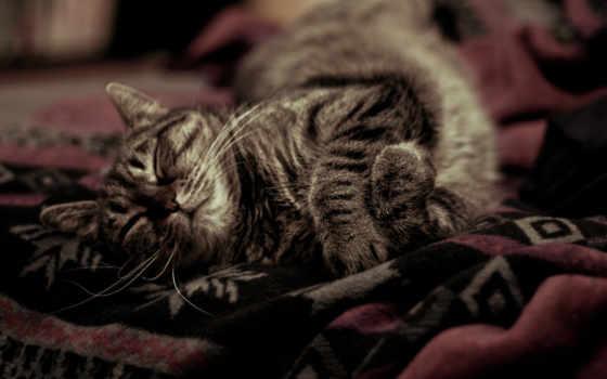 cat, котэ, тепло, покрывало, уютно, download, sleeping, картинка, выбирайте, пледе, resolutions, меньше,