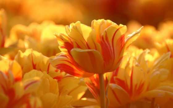 лето, природа, цветы