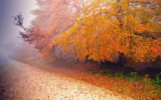 осень, туман, дорога