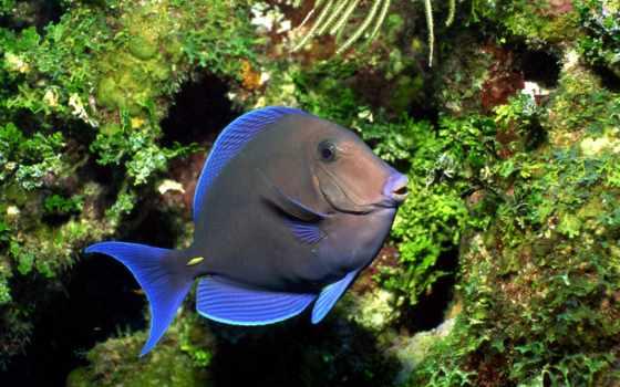 подводного, mir, мира