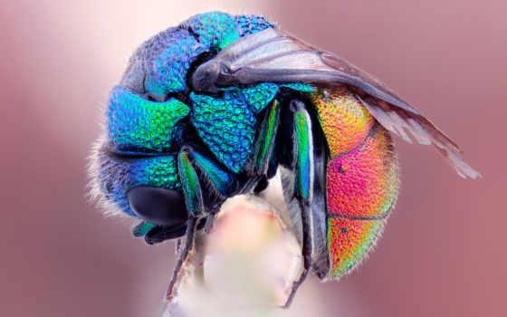 насекомые, fly, макро