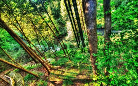 река, florestas, лес