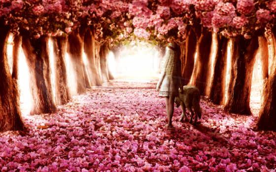 цветы, креатив, cvety, тропинка, высоком, девушка, мечты, trees, красавица,