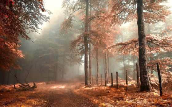 лес, осень, природа, free, foggy,