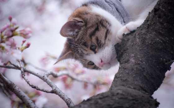 zhivotnye, ipad, кот, весна, cvety, коты, кошки, котята, дерево, елки,