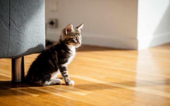 котята, взято, похожие, котят, их, кошки,