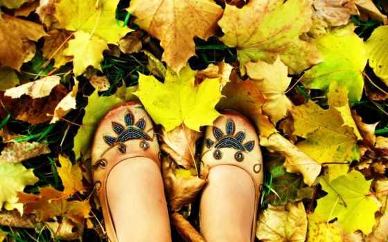 клен, листья