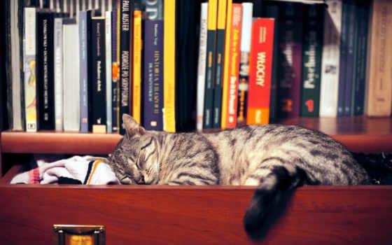 шкаф, книги, одежда, полка, кот, картинка, сон, картинку,