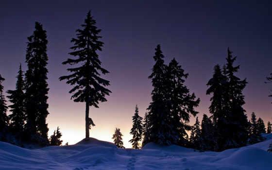 деревья, закат, следы