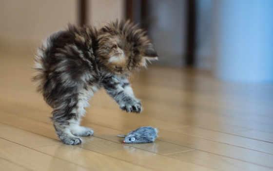 котенок, играет, кот, toy, мышкой, mouse, игрушки, кошек, кошки,