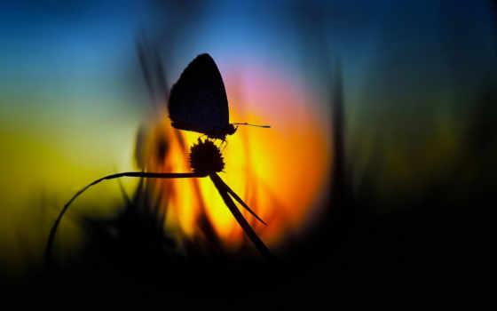 силуэт, закат, sun, девушка, бабочки, бабочка, закате, небо, море, devushki, трава,