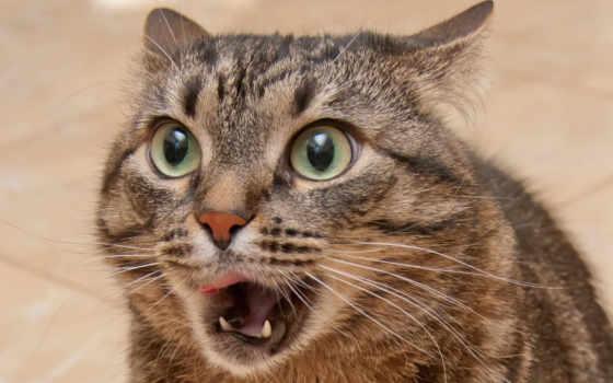кот, funny, cats