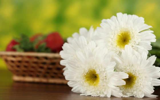 cvety, ромашки, февр