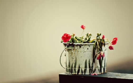 cvety, makro, увядшие