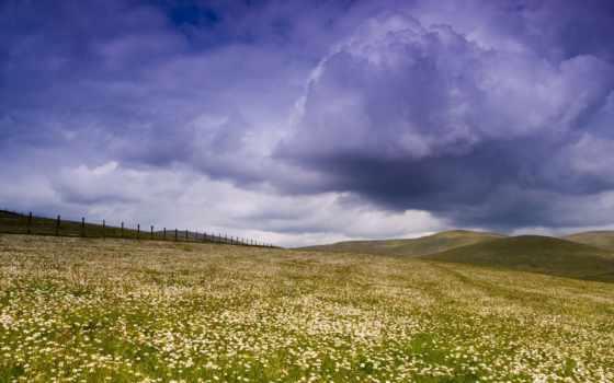 поле, daisies, daisy, flowers, desktop, clouds,