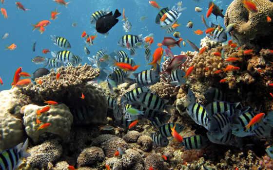 israeli, миро, eilat, underwater, красное, море, starve, red, alive, минск, плитка