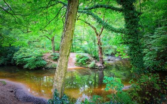 природа, сайте, деревья