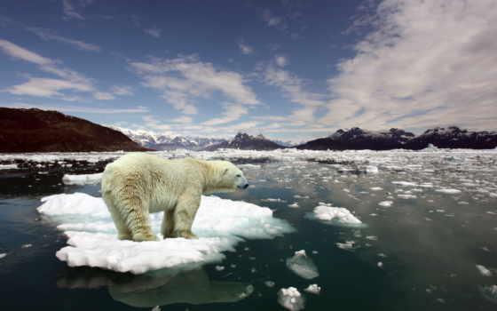 медведь, white, льдине, рейтинг, плывёт, фев,