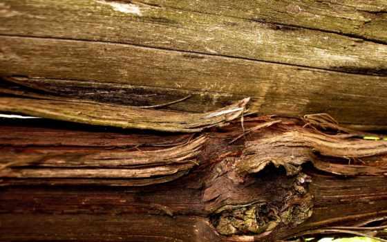 wood, текстура, материал