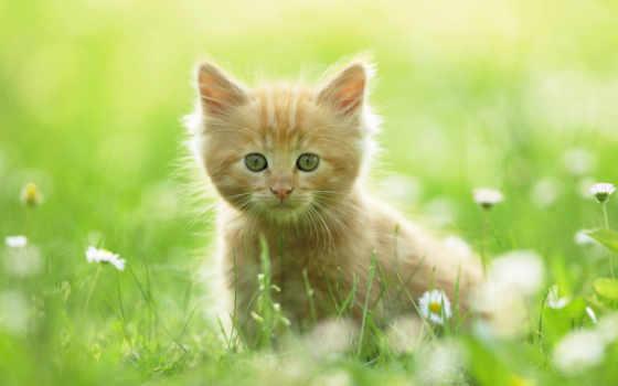 summer, котенок, red