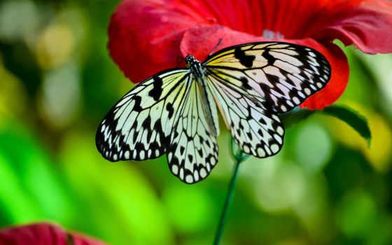 бабочка, насекомые, цветы, макро, бабочки,