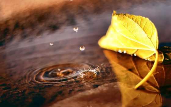 осень, макро, лужа, лист, широкоформатные, капли,