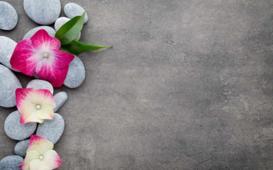 flowers, скалы, спа, zen, cvety, цветы, images, орхидея, фон,