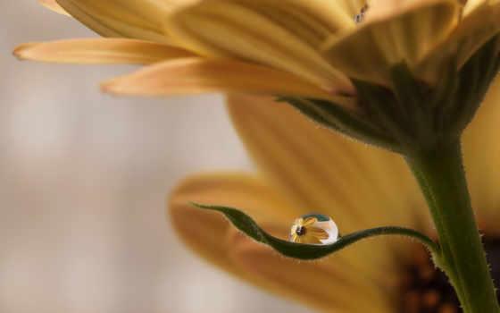 аиша, fiori,